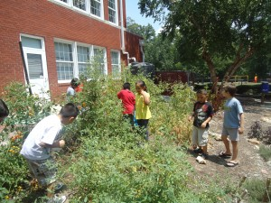 Harvesting for edibles in the school garden